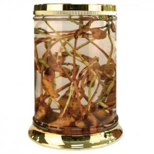 Vỏ Giá bán vỏ Bình Thủy Tinh ngâm rượu Hàn Quốc N27-43 Lít tại tphcm (Có Hàng)