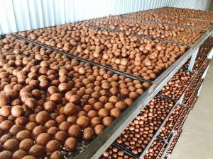 Cơ sở sản xuất hạt mắc ca, macca giá rẻ tại tphcm